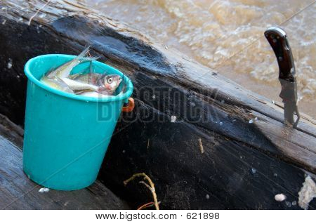 Bucket, Fish And Knife.