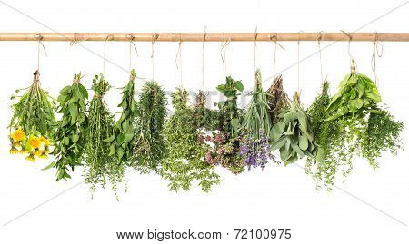 Fresh Herbs Hanging Isolated On White. Basil, Rosemary, Thyme, Mint