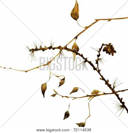 watercolor branches of larch