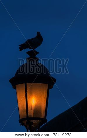 Dove On A Old-fashioned Street Lantern, Twilight