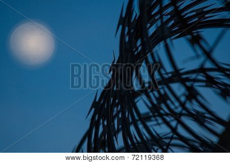 Concertina Wire Boundary, Night Sky With Moon As Background, Selective Focus