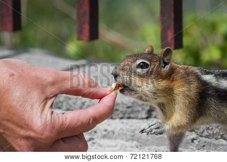 Feeding The Wildlife