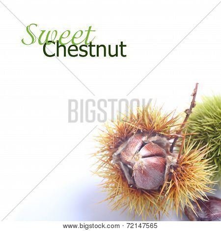 Shiny Chestnuts With Open Husk Over White