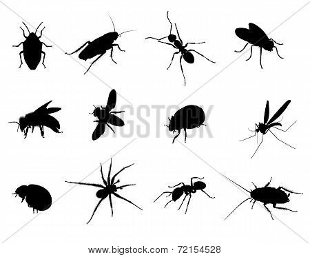 Bug Black Vector Silhouettes Illustration