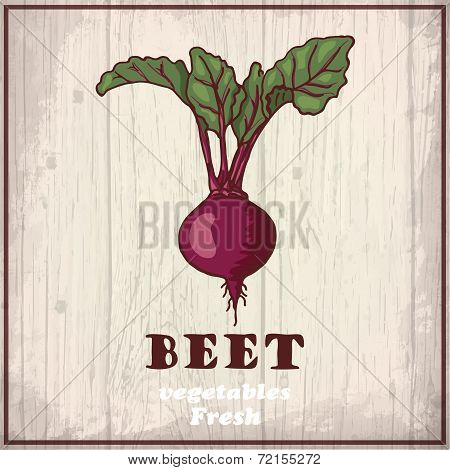 Fresh vegetables sketch background. Vintage hand drawing illustration of a beet