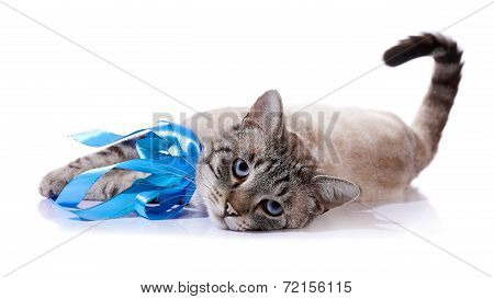 The Striped Cat With Bow Lies On A White Background.
