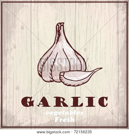 Fresh vegetables sketch background. Vintage hand drawing illustration of a garlic