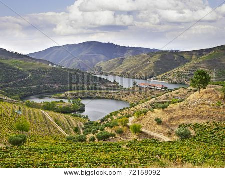 Beautifu Landscape In The Douro Region