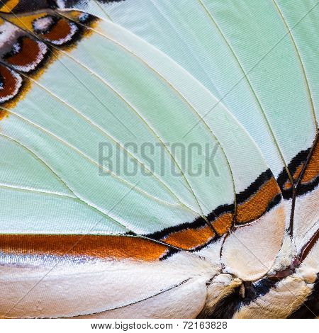 Butterfly's Wing Texture