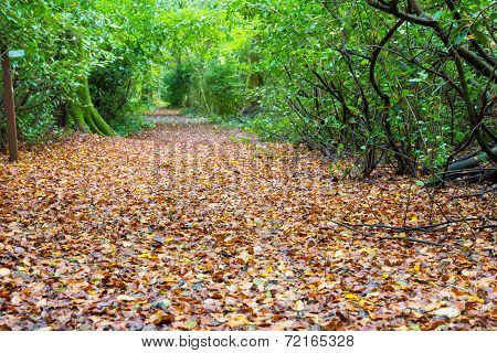 Foot Path Covered With Leaves