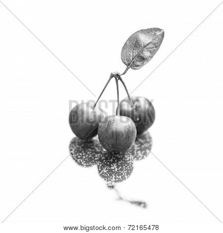 Three Crab Apples Isolated On White