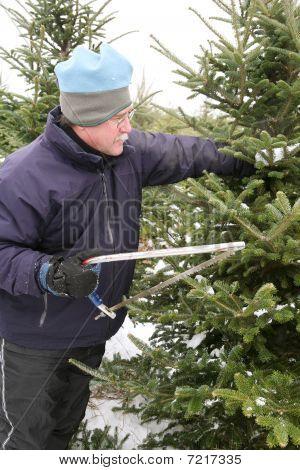 Man Cutting A Christmas Tree