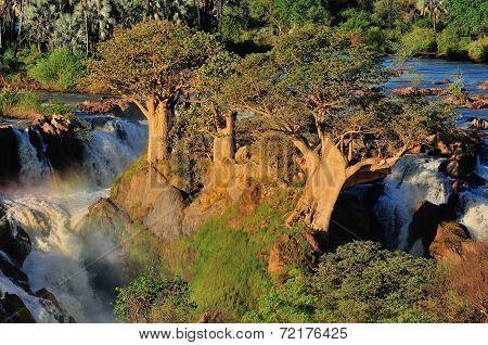 Baobabs At Epupa Waterfall, Namibia