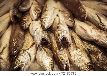 Mercat De Sant Josep Barcelona, Stack Of Dead Predator Fishes