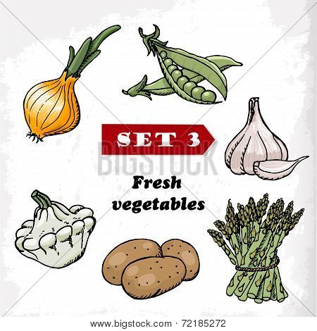 Set 3 Fresh Vegetables Of Onions, Garlic, Squash, Peas, Potatoes And Asparagus. Vector Illustration
