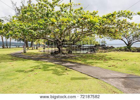 Coconut Island Gardens