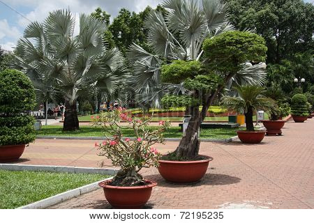 Tropical Park with flowers and trees