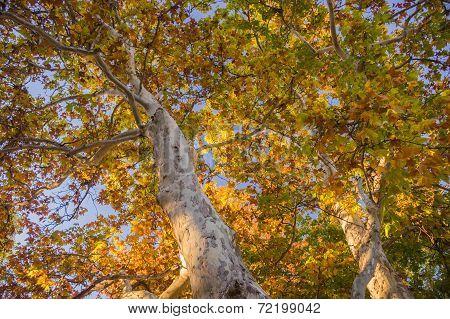 Sedona foliage on a fall day