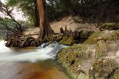 stock photo of suwannee river  - Little Gem Spring as it enters the Suwannee River - JPG