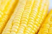 foto of corn-silk  - The close up grains of ripe corn - JPG