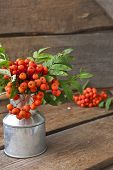 stock photo of rowan berry  - Rowan berries in a can on wooden background - JPG