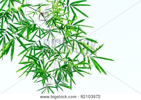Green Bamboo Leaf In White Background