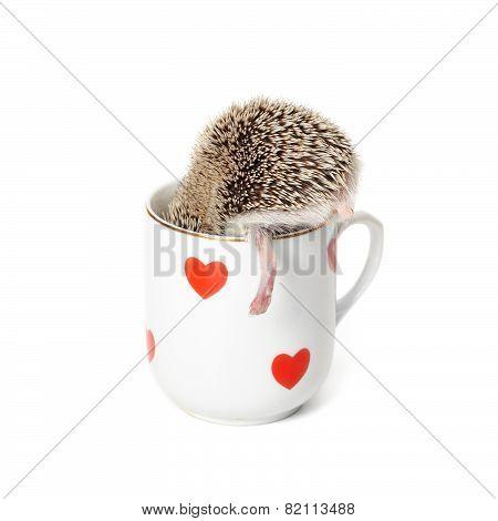hedgehog's heel