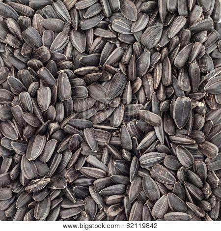 Background of sunflower seeds