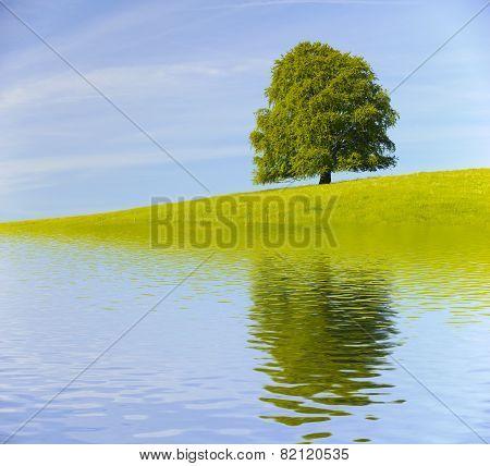 single big old tree