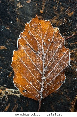 frosty autumn leaf background texture