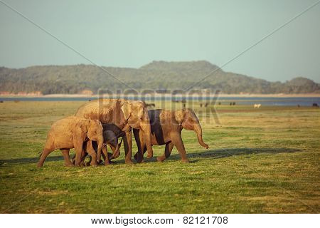 Elephants of all ages