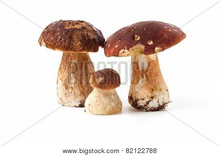 Ceps Isolated On White Background
