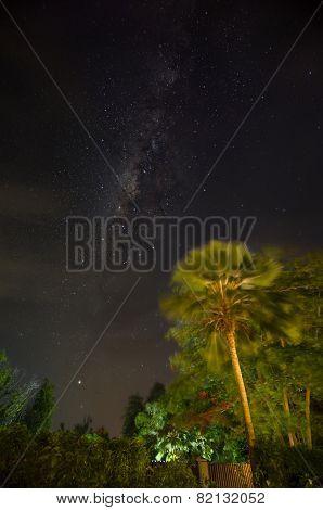 Palm Tree And Milky Way