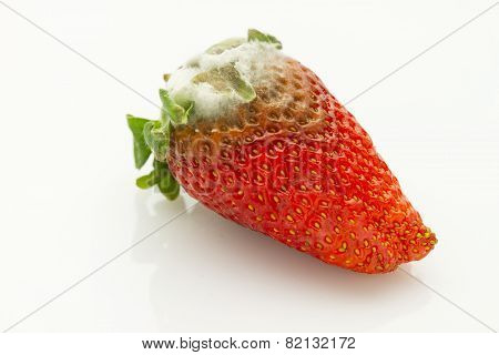 Mildew Strawberry