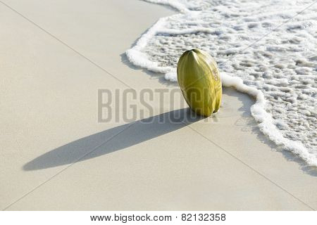Coconut On Beach, Mahe, Seychelles