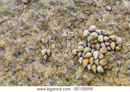 Sea Shells, La Digue, Seychelles