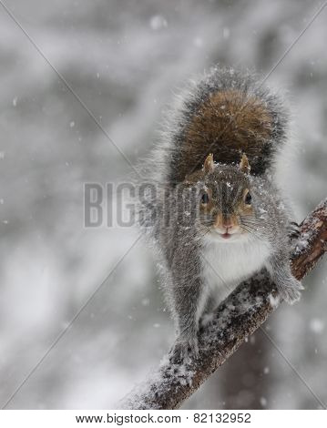 Squirrel in Falling Snow