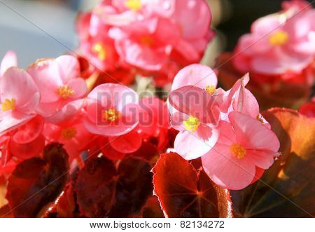 Beautiful Vintage Flower In The Garden