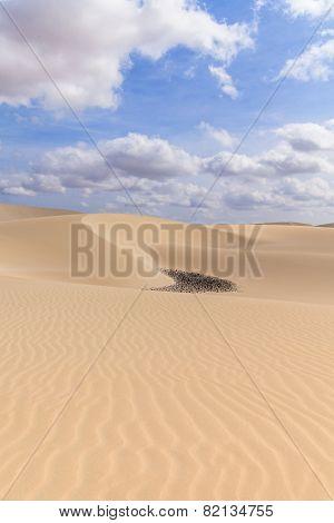 Sand Desert In Viana Boavista, Cape Verde