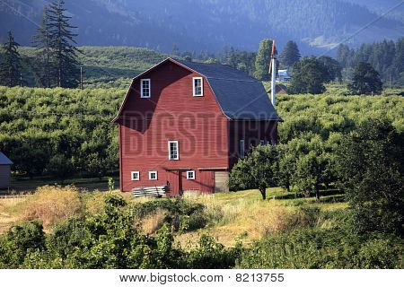 Red barn & orchards.
