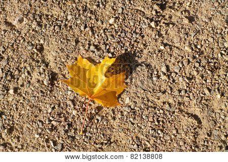 Maple Leaf On Earth