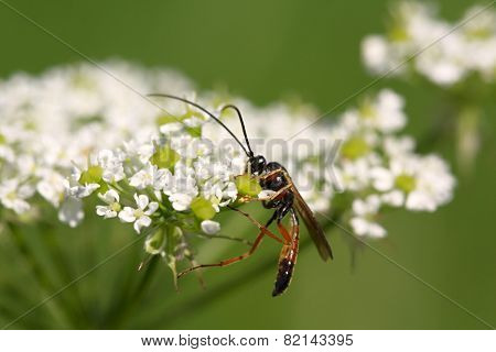 One Wasp