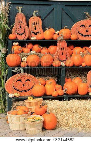 Pretty scene of pumpkins and Jack-O-Lanterns
