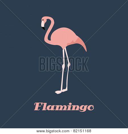 Vector flamingo pink