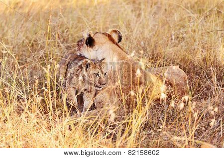 Lioness With Cub In Masai Mara