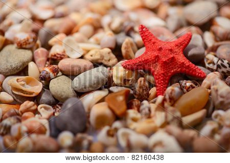 Sea  star on the sea shore