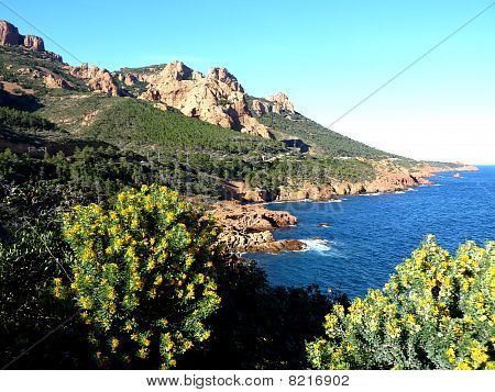 Esterel Massif And Big Vegetation