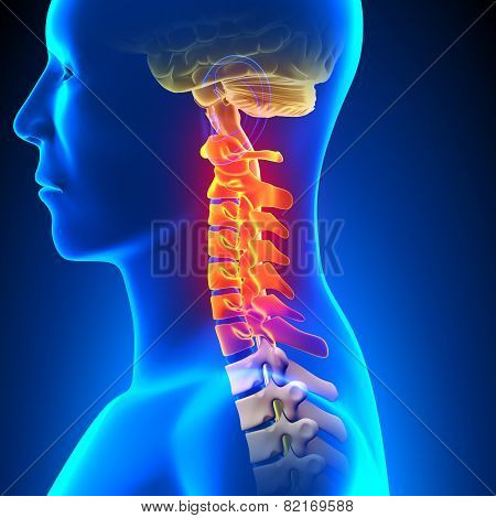 Cervical Spine Anatomy Pain Concept