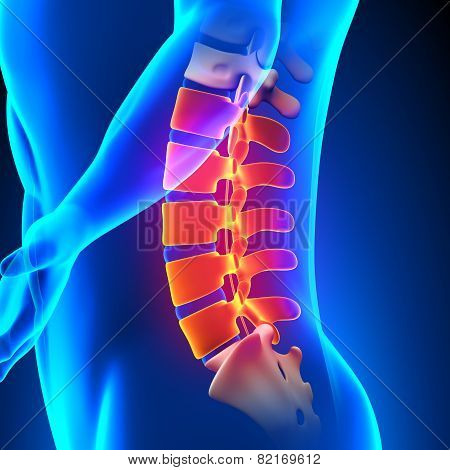 Lumbar Spine Anatomy Pain Concept
