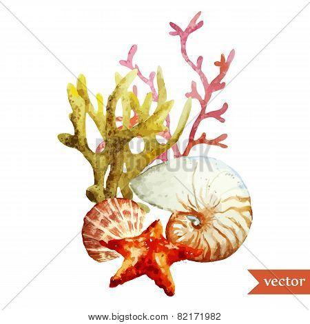 watercolor, vector, sea, coral, shell